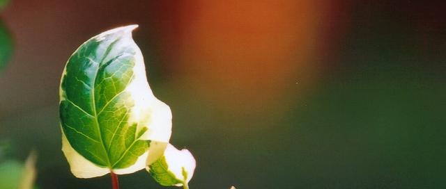 「日光的眷顧」 ~ 攝於麗江古城‧雲南‧中國 ~ 2001.7 ~ Canon EOS5