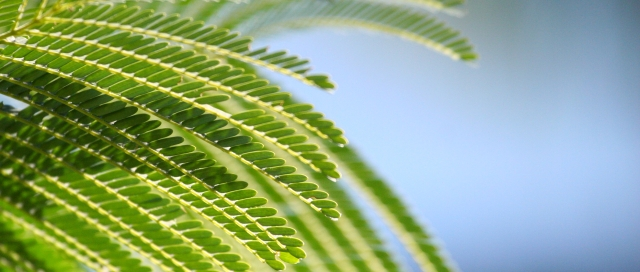 「青蔥歲月」~ 攝於凱恩斯(Cairns)‧澳洲 ~ 2007.4.21 ~ Canon EOS 20D ~ ISO1600 F5.0 1/8000 320mm